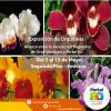 Exposición de Orquídeas